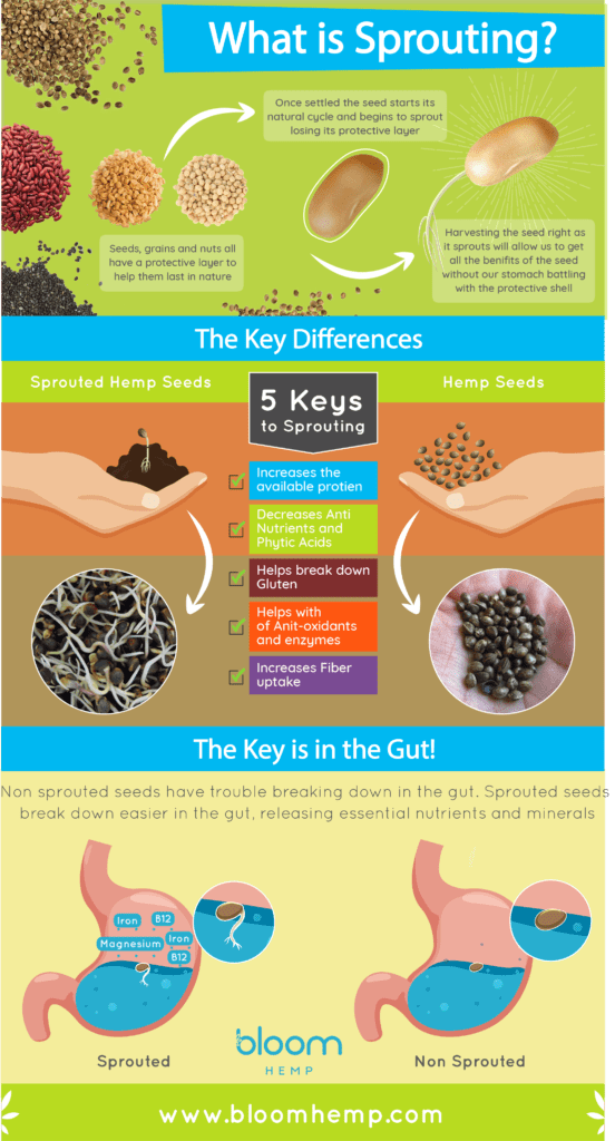 Benefits of Sprouted Hemp Seeds Infographic